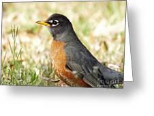 March Robin Greeting Card