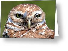 Marco Burrowing Owl - I Know What You're Thinking Greeting Card