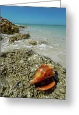 Marco Island South Beach Greeting Card