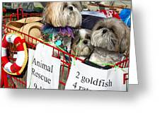 Mardi Gras Pekingese Pups Greeting Card by Kathleen K Parker