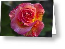 Mardi Gras Rose Greeting Card