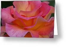 Mardi Gras Rose Macro Greeting Card