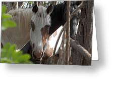 Mares In Trees Greeting Card