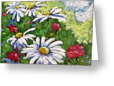 Marguerites 002 Greeting Card