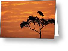 Maribou Stork On Tree With Orange Sunrise Sky Greeting Card