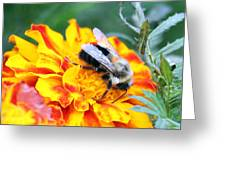 Marigold And The Bee Greeting Card