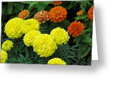 Marigold And Zinnias Greeting Card