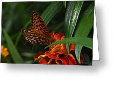 Marigold Grows Wings Greeting Card