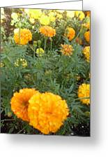 Marigold Light Greeting Card
