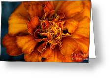 Marigold On Blue Greeting Card