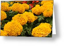 Marigold Party Greeting Card