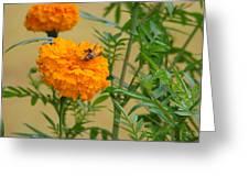 Marigold Greeting Card