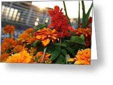 Marigold Sunshine Greeting Card