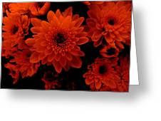 Marigolds In Orange Light Greeting Card