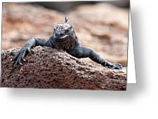 Marine Iguana Greeting Card