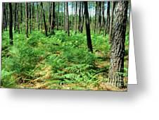 Maritime Pine Trees Greeting Card