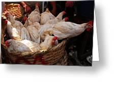Market Chickens  Grenada Nicaragua Greeting Card