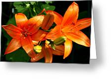 Marmalade Lilies Greeting Card by David Dunham