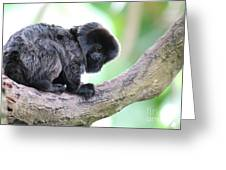 Marmoset Sitting Perched In A Tree Greeting Card