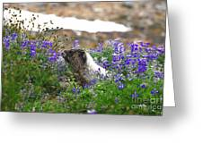 Marmot In The Wildflowers Greeting Card