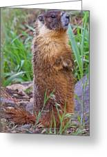 Marmot Love Greeting Card