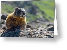 Marmot On The Ridge Greeting Card