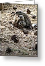 Marmot Stack Greeting Card