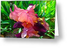 Maroon Iris Flower Greeting Card