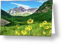 Maroon Sunflowers Greeting Card