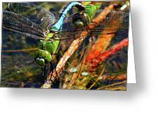 Married With Children Dragonflies Mating Greeting Card