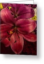 Marsala Lily Greeting Card
