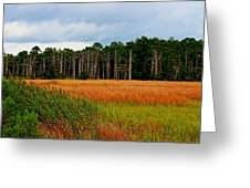 Marsh And Trees Greeting Card