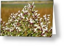 Marsh Blooms Greeting Card