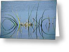 Marsh Design Greeting Card