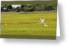 Marsh Egrets Greeting Card
