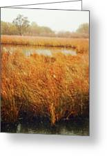 Marsh Grass And Snow Greeting Card