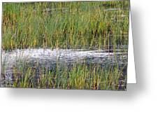 Marsh Grasses Greeting Card