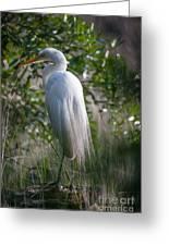 Marsh Heron Greeting Card