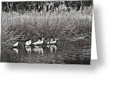 Marsh Hunters Greeting Card