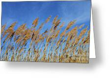 Marsh In The Wind Greeting Card