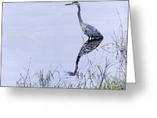 Marsh Reflections - Great Blue Heron Greeting Card
