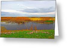Marsh Spring Greeting Card