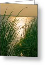 Marsh Sunset Greeting Card