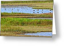 Marsh Tide Pool Greeting Card