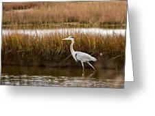 Marsh Wader Greeting Card