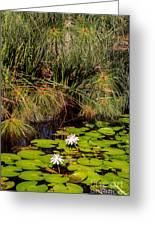 Marsh Waterlilies  Greeting Card