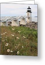 Marshall Point Daisies 2 Greeting Card