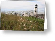Marshall Point Daisies Greeting Card