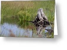 Marshland Reflections II Greeting Card