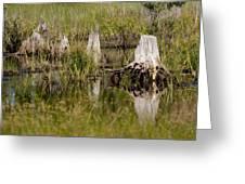 Marshland Reflections Greeting Card